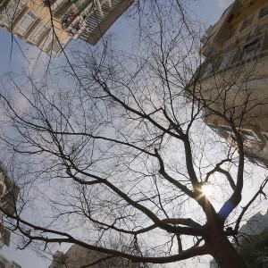 树的天际线1
