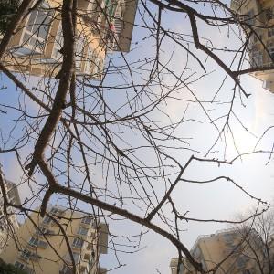 树的天际线2