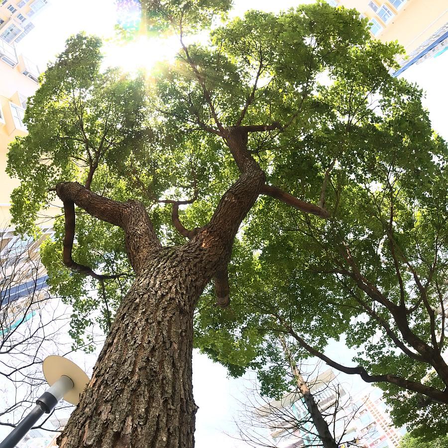 树的天际线4