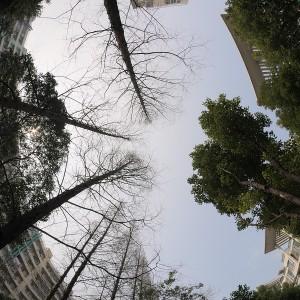 树的天际线5